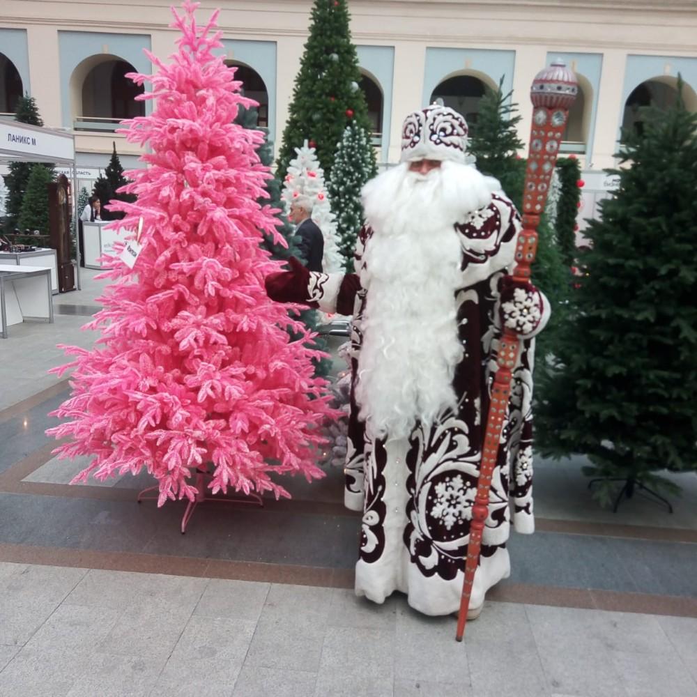 Ель Натуральная розовая Заснеженная 155 см